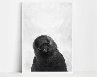 Raven Print Raven Poster Wall Art Print Animal Print Raven Art