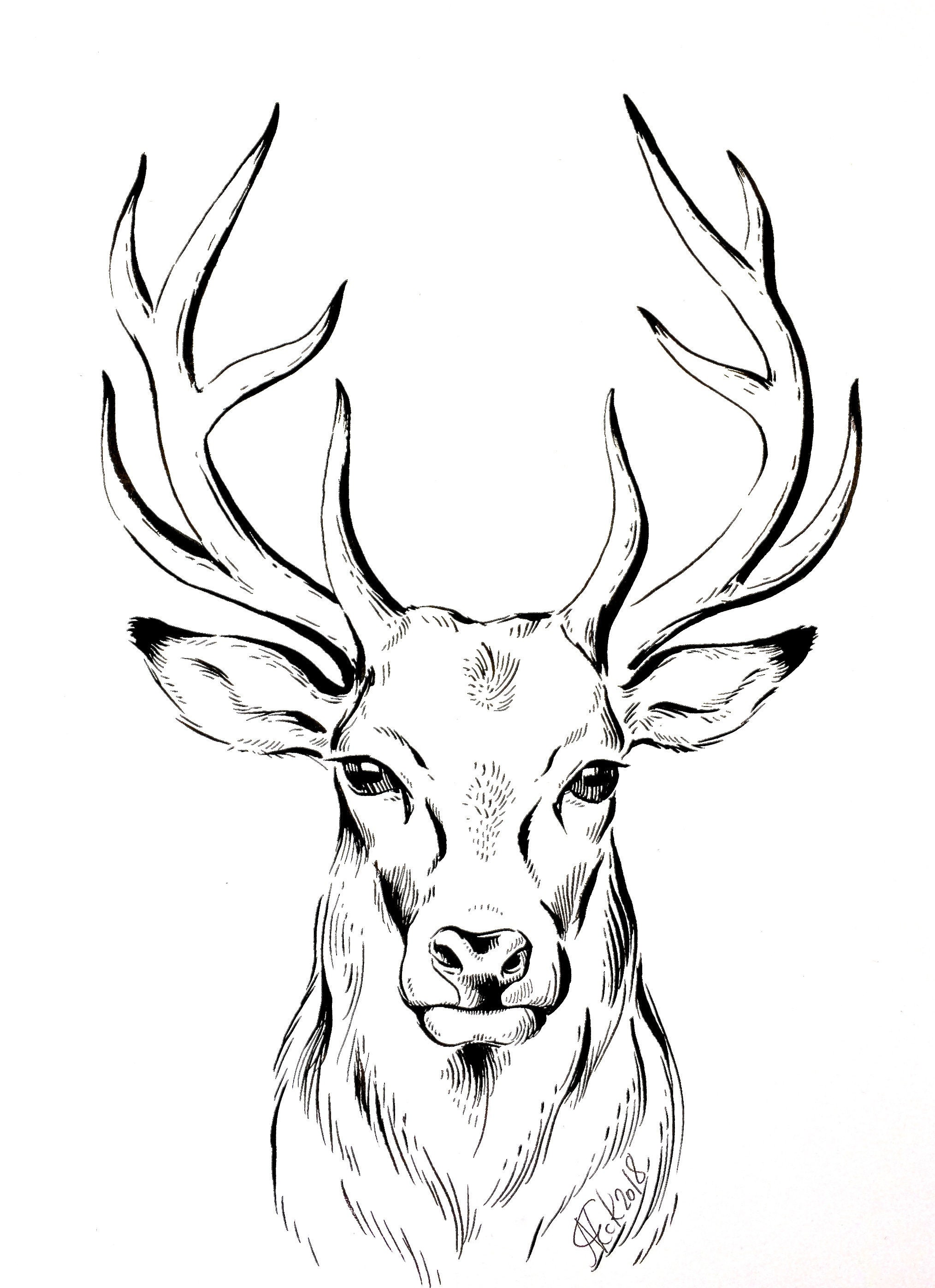 original deer ink drawing deer illustration stag animal