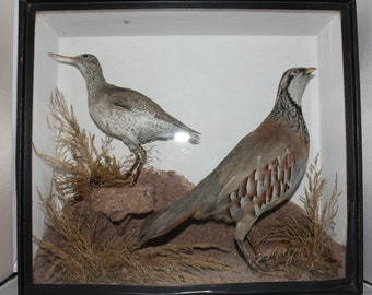 Taxidermy - A Sandpiper and a French Partridge mounted in glazed wooden case
