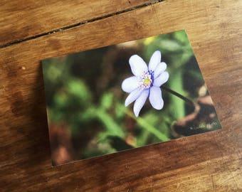 Greeting card / / Spring Awakening / / A6