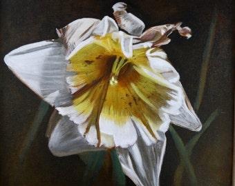 Mid-Life Flower: Daffodil