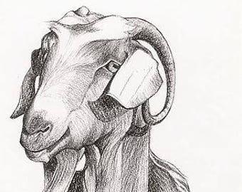 Card - Portrait of Billy goat