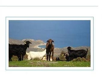 Card - Goats on a hillside near Vourkoti, Andros