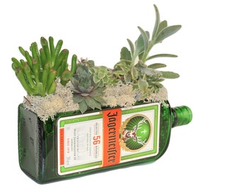 Jagermeister Bottle Live Succulent Gift / Green Glass Planter with DRAINAGE! / Man Cave / Husband Gift / Bottle Decor