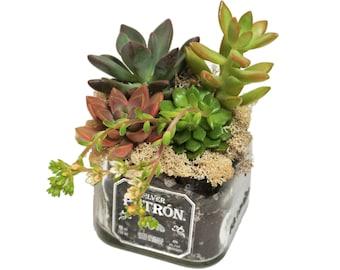 Patron Bottle Succulent Planter / Succulents / Tequila Bottle Alcohol Gift / Indoor Planter / Gift Ideas For Her / Bottle Garden Cut Bottle