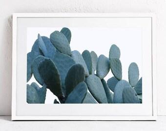 Blue Wall Art Print, Botanical Print, Nature Print, Cactus Print, Cactus Plant Photo Print, Printable Art Photography DIGITAL DOWNLOAD Print