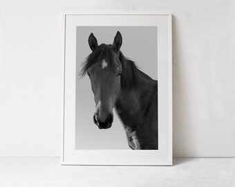 Horse Photography-Horse Wall Art Printable Wall Art-DIGITAL DOWNLOAD -Black and White Photo Wall Print-Horse Poster Print-Horse Art Print-A2