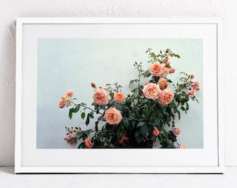 Floral Wall Art Print, Pink Roses Photography Print, Floral Print Wall Art Printable Art, Botanical Print DOWNLOAD Bedroom Art,Digital Print