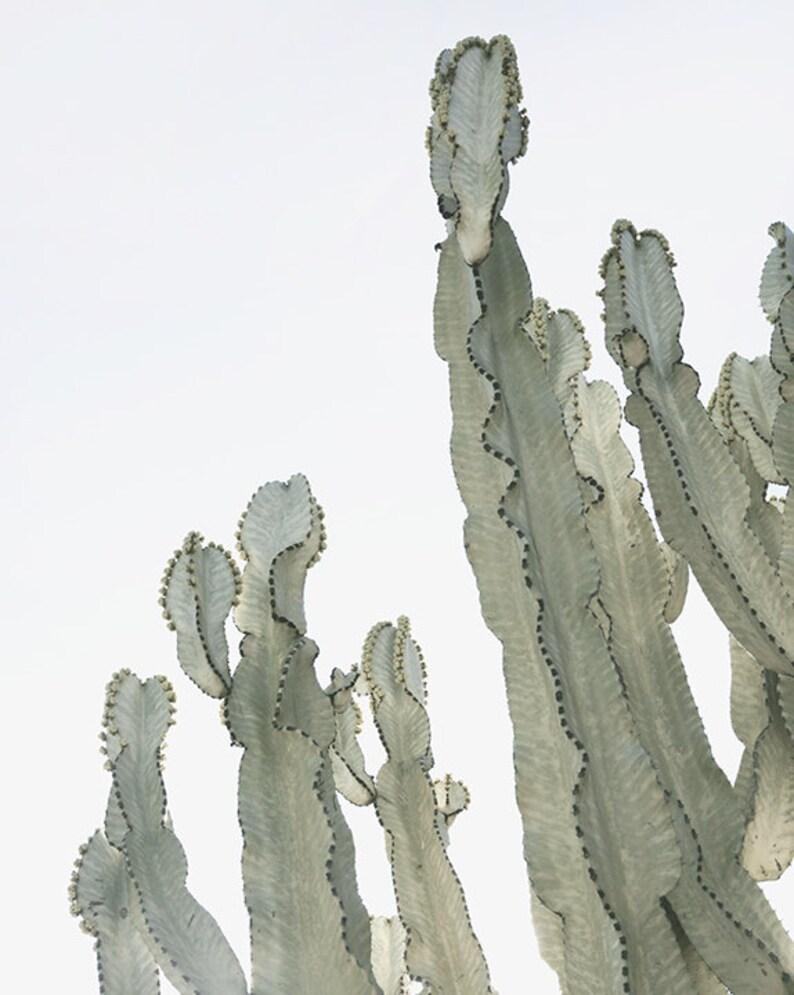 Set of 4 Cactus Prints  Fine Art Desert Prints  8 x 10 in