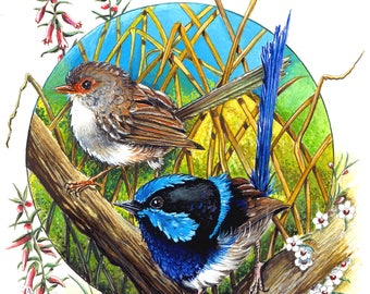 Magic Encounter - Superb Blue Wrens