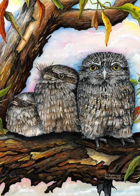 The Daydreamers - Tawny Frogmouths