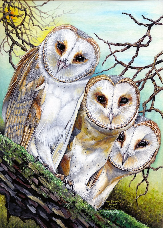 One Blessed Moment - Barn Owls