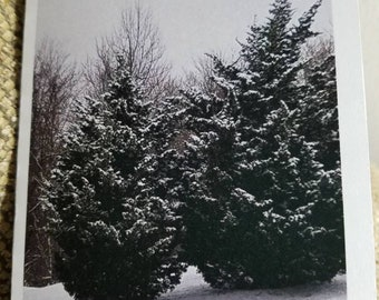 Snowy Trees (1 Note Card with White Envelope)