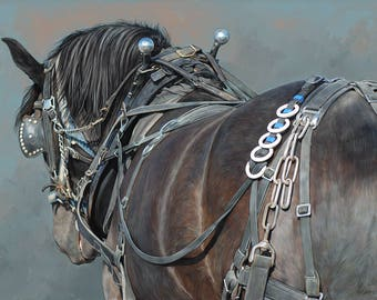 Reliable Power - Black Percheron Draft Horse in Working Harness
