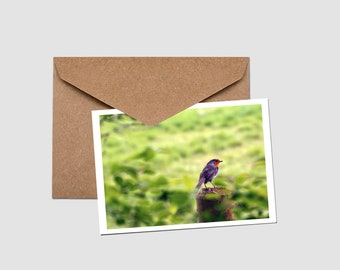 Robin watch - Greeting Card