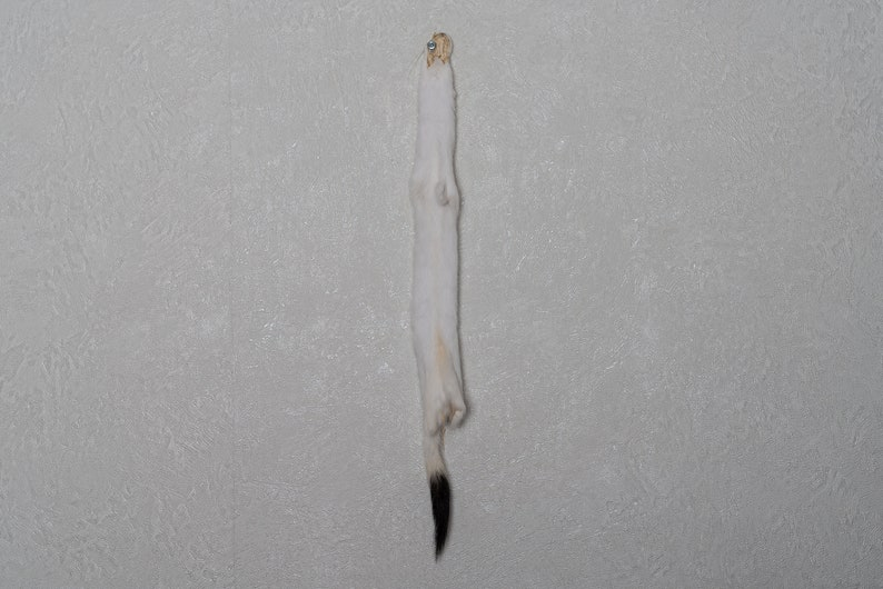 Real Hide For Sale White Ermine Weasel Tanned Fur Pelt Stoat Skin Decor St5166 Genuine