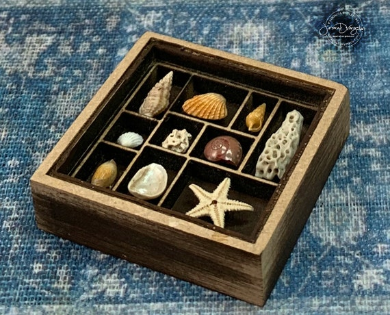 Sea Shell Collection Dollhouse Miniature 1:12 scale