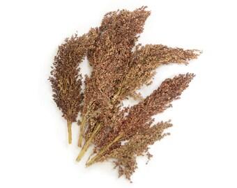 dried sorghum grass brown tan 40g
