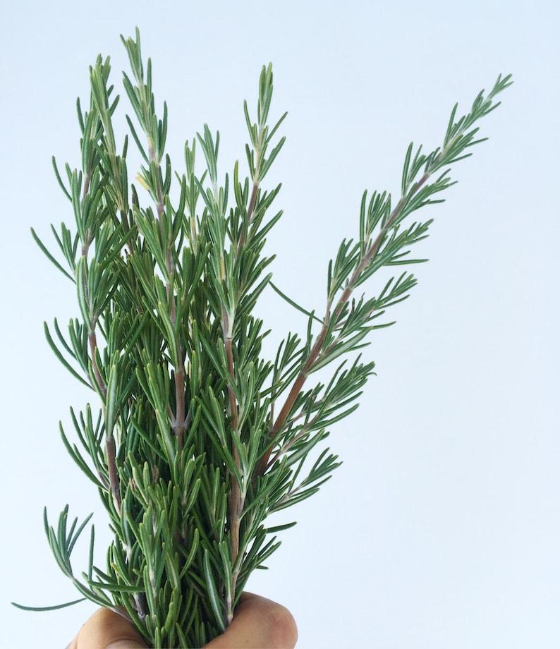 Bundle of Rosemary Sprigs  Freshly Cut image 0