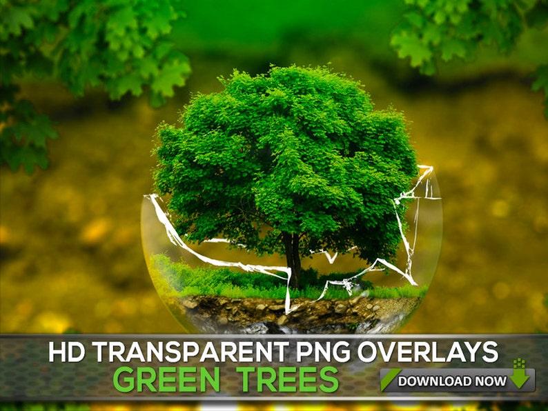 5af35c0b1 50 TRANSPARENT PNG Green Trees Overlays Transparent Trees