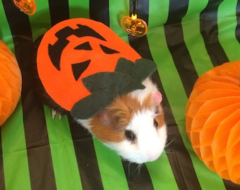 Guinea pig costume for Halloween. Pumpkin costume for small pet. & Dog Costume Halloween costume for Small Dogs Pet Costume