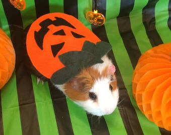 Guinea pig costume for Halloween. Pumpkin costume for small pet.