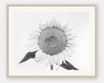 Black and white Sunflower Art Print   Rustic Neutral Floral decor   French Country Black and White Wall Art   Minimalist Sunflower Photo Art