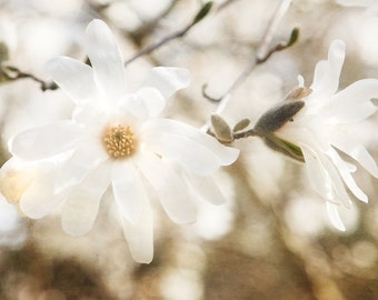 White Flower Photography, Spring Floral Print, Cream Wall Art, Nursery Decor, Dreamy White Pale Decor, Shabby Chic