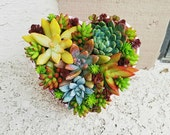Lovely Pink rustic heart glass bowl with living succulent arrangement ( valentines day mothers day birthday gift)