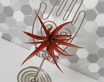 Vintage-Home Decor-Kitchen-Kitchen Decor-Gift for Her-Gift-Air Plant-Planter-Housewarming Gift-Terrarium-Hanger-Plants-Wire