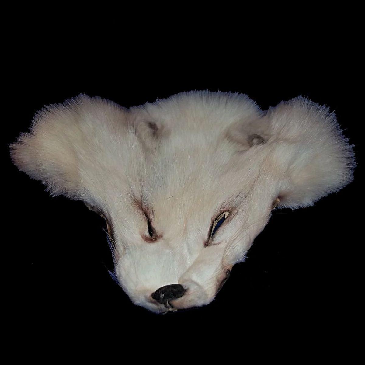 Arctic Fox Face Fur Fox Head White Fox Craft Supplies Fur Taxidermy Spirit  Mask