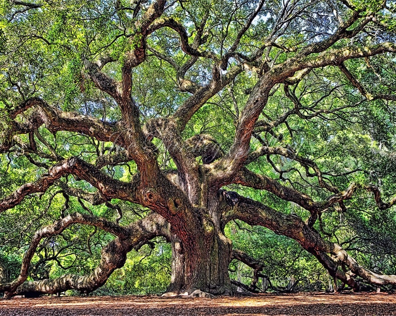 Angel Oak Johns Island Charleston South Carolina home image 0