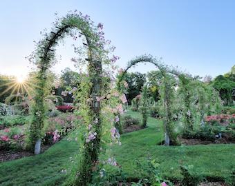 Sunrise in the rose garden, Elizabeth Park, Hartford, West Hartford, Connecticut, New England, garden arch, gardens, archival print, signed
