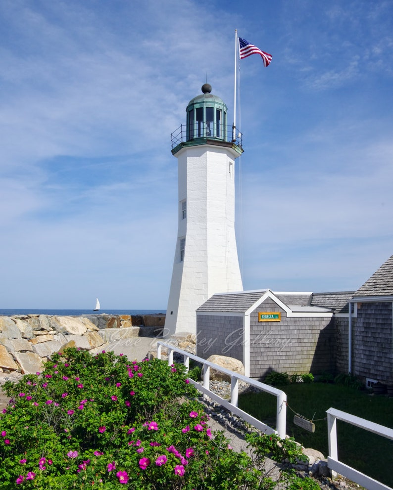 Beach Roses at Scituate Light lighthouse photography beach image 0