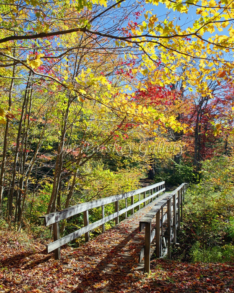 Peak foliage color Woodford State Park Woodford Vermont image 0