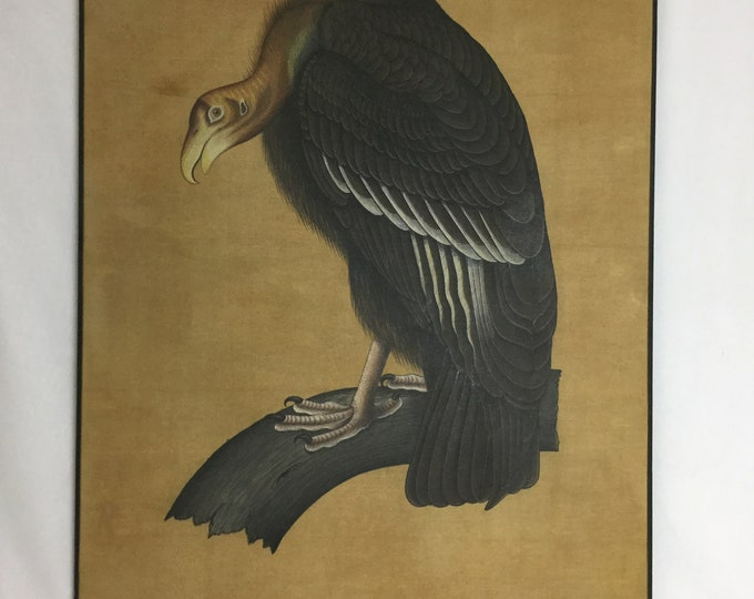 Ca.1960s Birds Of America original Audubon Style Painting Of a Turkey Vulture on Silk in Acrylic and Watercolor John Hopkins Collection
