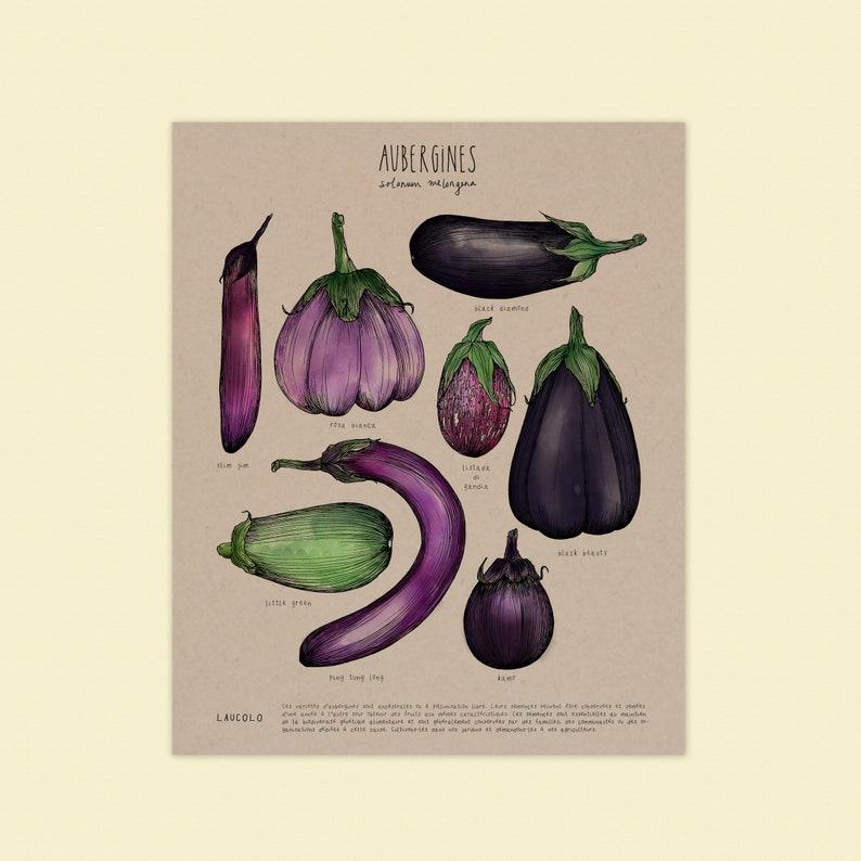 AUBERGINE Beauté noire 1000 Graines Seeds