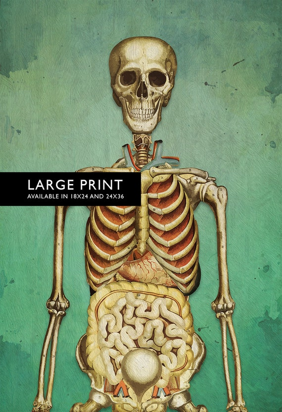 Medical Illustration Skeleton Print Vintage Illustrated Human Etsy