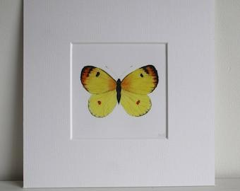 "Butterfly, Fine Art Giclée Print, watercolour, yellow, 8 X 8"" by TheWildThingsArt"