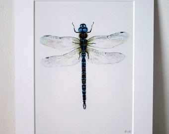 "Fine Art Giclée Print, Dragofly, watercolour 8 X 10"" by TheWildThingsArt"