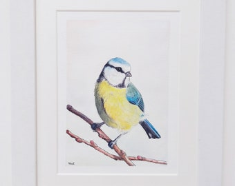 Bird Art, Blue tit, ORIGINAL WATERCOLOUR, 8 X 10, painted and mounted by TheWildThingsArt