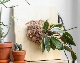 DIY Plant mouting Vertical garden kit
