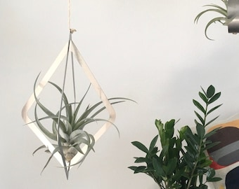 Stainless steel hanger with large Tillandsia