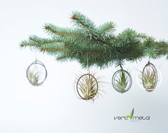 Air plant holder in stainless steel