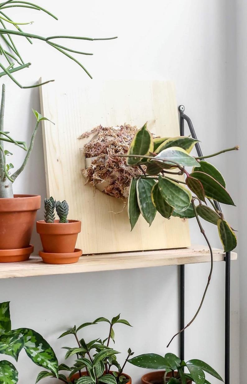 DIY Plant mouting kit  Vertical garden kit image 0