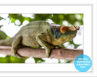 Digital Download, Madagascar Chameleon, Animal Photography, Chameleon Print, Chameleon Photo, Printable Chameleon, Chameleon Prints Digital