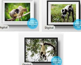 Set of 3 digital photo - Madagascar Lemurs, Digital Download, Monkey Photo, Wild Nature Photography, Prints Digital, Printable Nursery Decor