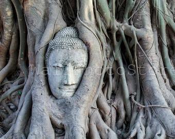 Buddha Head Statue in Tree Roots, Buddha Photography, Thailand Photography, Buddha Prints, Temple, Buddha Wall Art, Fine Art Photography
