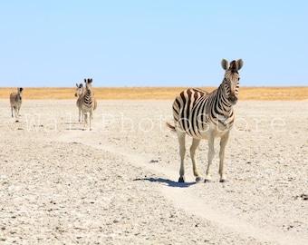 Zebra Photography Print, Animal Photography, Zebras Pictures, Zebra Print Decor, African Wildlife Photos, Wild Nature Photography