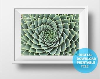 Digital Download, Spiral Aloe Polyphylla, Lesotho Aloe Photo, South Africa, Aloe Print Digital, Botanical Photography, Aloe Printable Decor